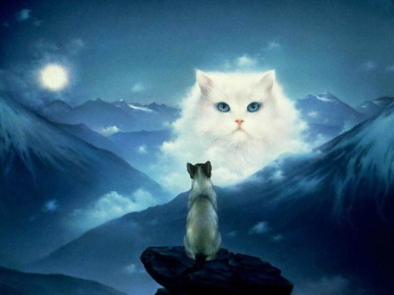 Il rifugio degli elfi gatti fantasy for Gatti sfondi desktop gratis