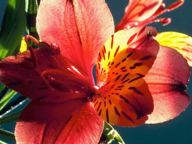 Sfondi per desktop fiori for Immagini per desktop fiori